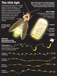 firefly tech sheet