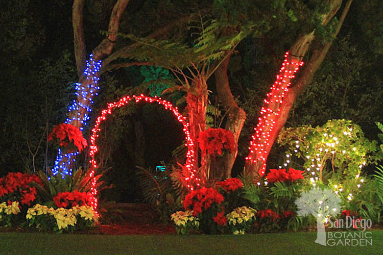 Encinitas San Diego Botanic Garden Of Lights1_0 ...