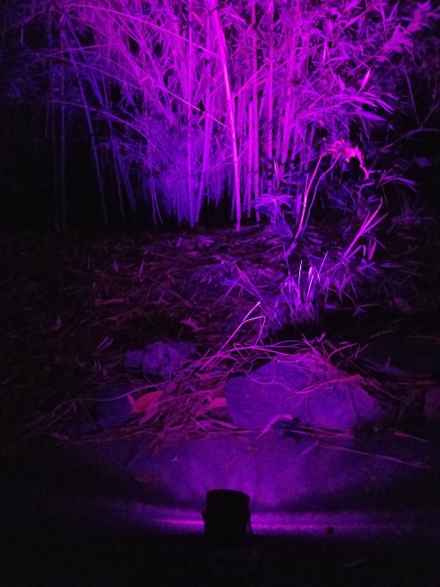 purple-16-color-led