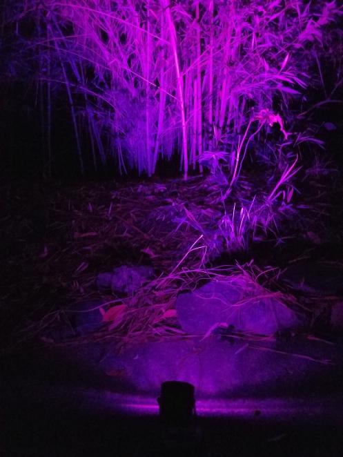 purple-16-color-led